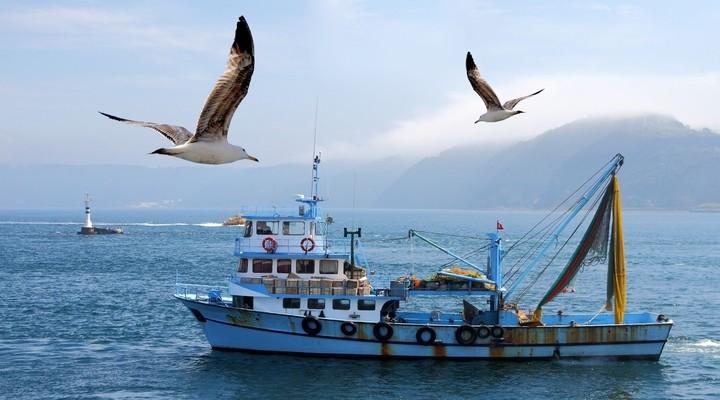 Vissersboot met meeuwen op voorgrond, Ierland