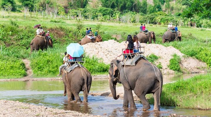 Toeristen tijdens een safari met olifanten