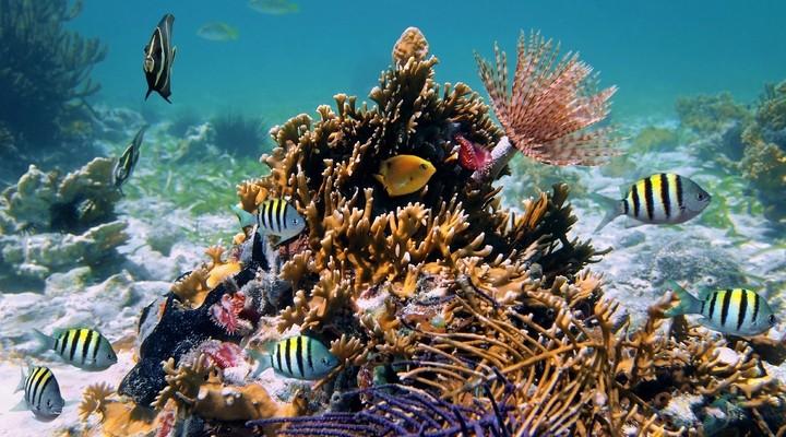 Onderwaterleven bij Punta Cana