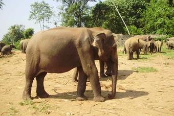 Geen olifantenritjes meer bij Stip Reizen