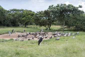 Moholoholo centrum in Zuid-afrika