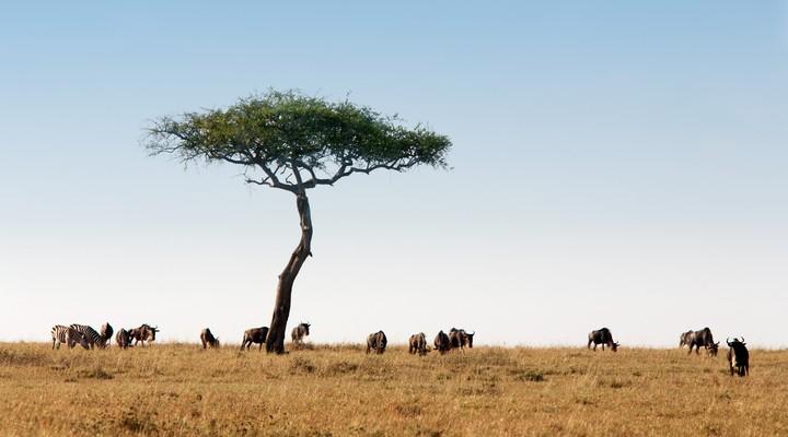 Kenia's natuurparken