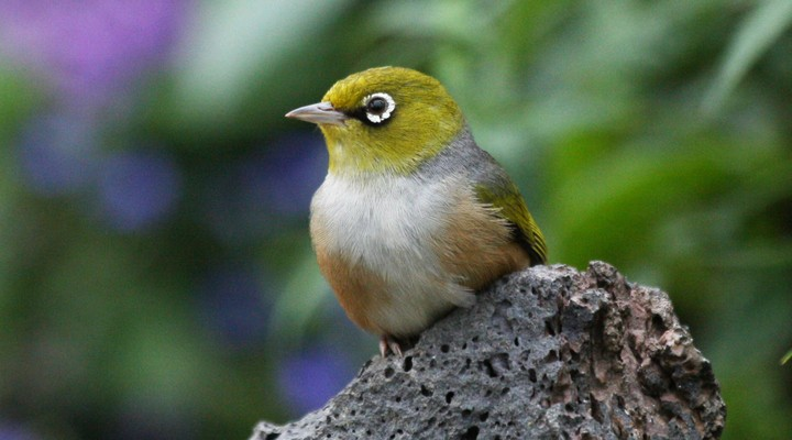 Zeldzame dieren Mauritius