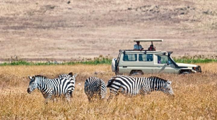 Een zebra-safari in Kenia