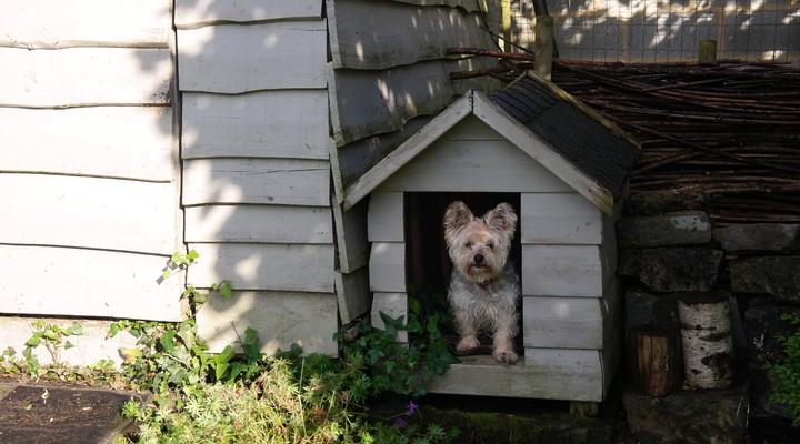 Er was zelfs een hondenhok aanwezig bij het huisje!