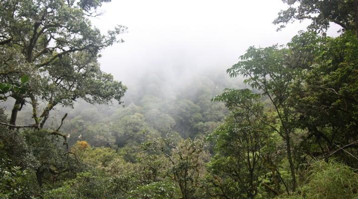 Mist in de bossen