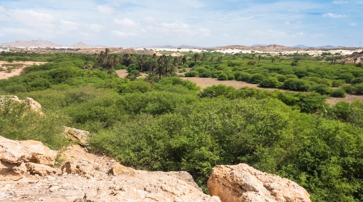 Een groene oase op Boa Vista