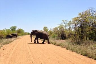 Nieuw bij 333TRAVEL: Zuid-Afrika