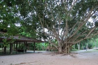 Tiendaags meditatieretraite in Thailand