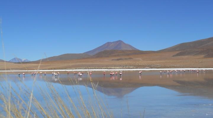 Flamingo's in een van de laguna's