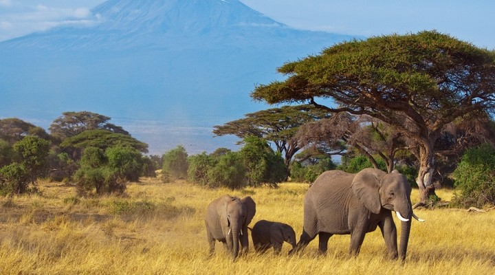 Olifanten op pad in Kenia