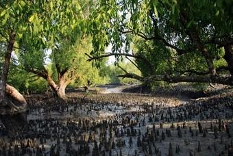 Nationaal Park Sundarbans