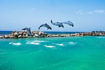 Dolphin Cove in Ocho Rios