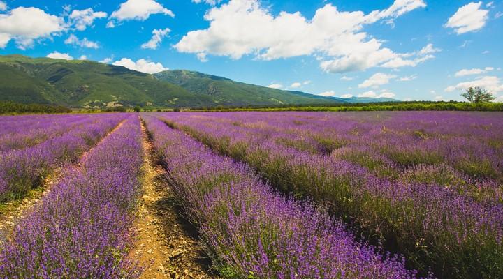 Lavendelveld bij Kazanlak