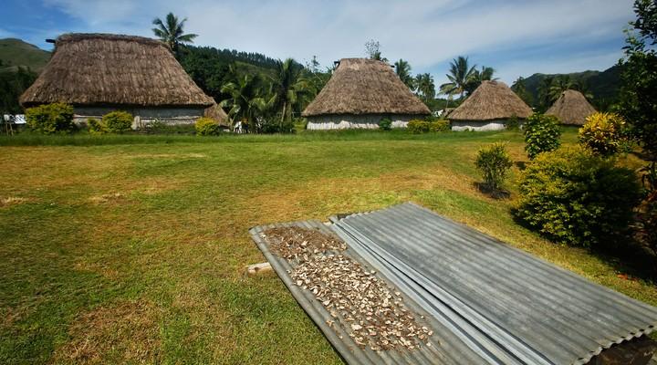 Drogen van kavawortel in Fiji