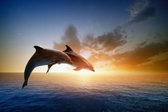 Dolfijnen spotten met Ross Holidays