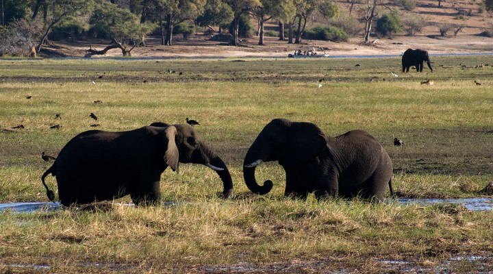 the big 5 in Botswana