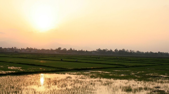 De rijstvelden van Phong Nha onderweg