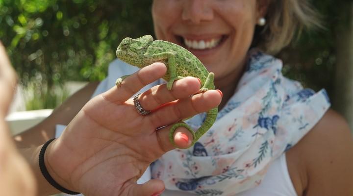 Kameleon op Farol