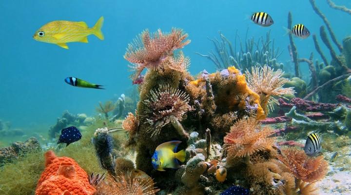 Onderwaterwereld van de Seychellen