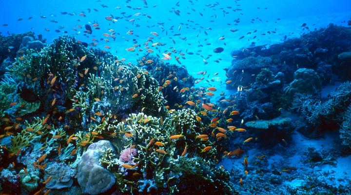 Op de Malediven kun je goed duiken en snorkelen