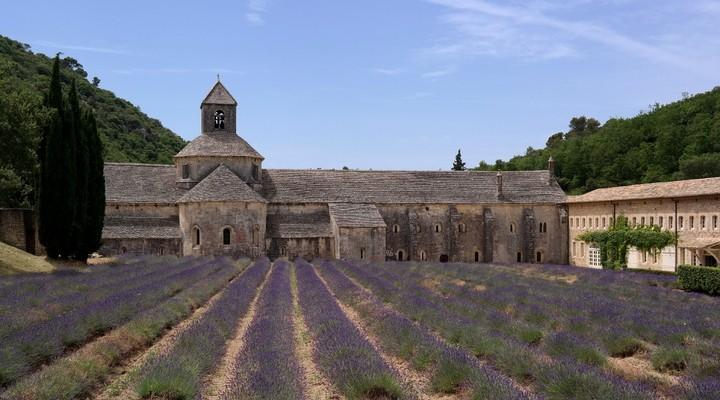 Een van de lavendelvelden bij de Abdij van Senanque