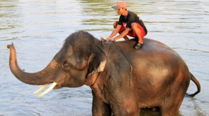 thai rijdt op olifant, Thailand