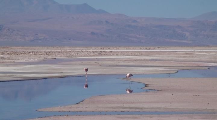 Atacamawoestijn, Chili