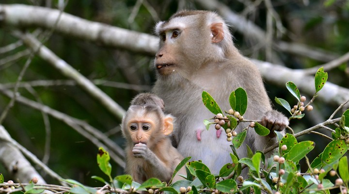 Project 'Monkey Rehabilitation Centre'