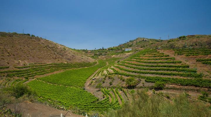 Wijngaarden op de Canarische Eilanden