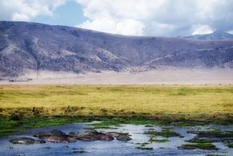 Eenmalige themareis Tanzania bij SNP Natuurreizen