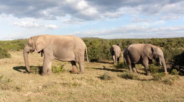 Drie olifanten in een nationaal park