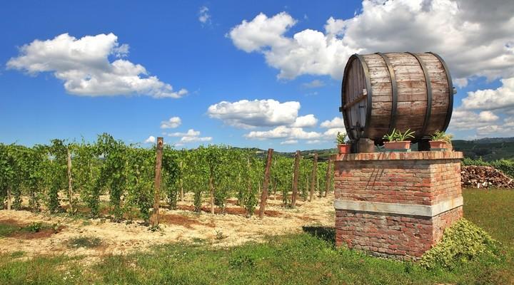 Wijngaard Piemonte, Italië
