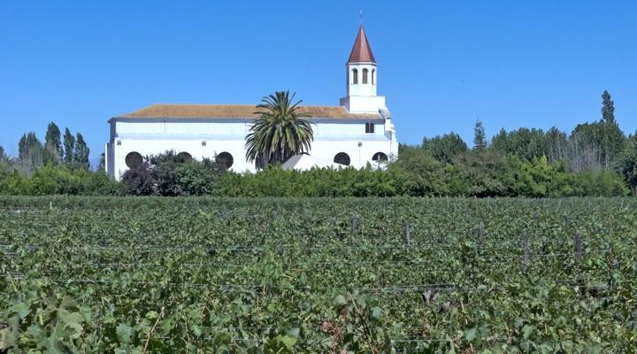 Wijnveld en gebouw Chili