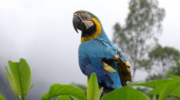 Een papegaai gespot tijdens de Inca Jungle Trail