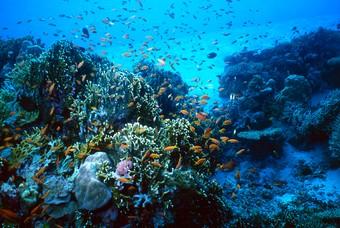 Onderwaterwereld Malediven