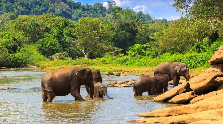 Olifanten National Park