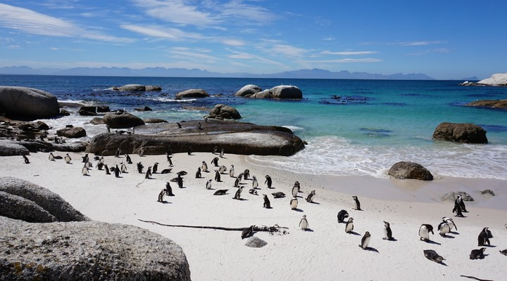 Pinguins op Boulders Beach