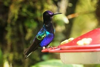 Ecuador is het land om vogels te spotten