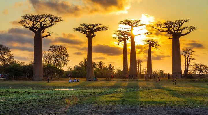 Avenue of the Baobabs op Madagaskar