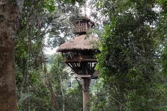 De Gibbon Experience!