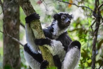 Nieuw bij African Travels: kleinschalige groepsreizen naar Madagaskar