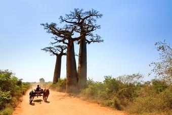 Een jongen op een kar in Madagaskar