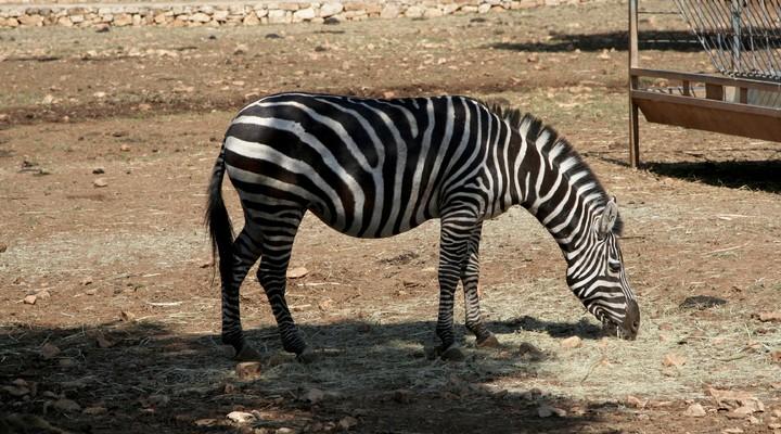 Zebra Nationaal Park
