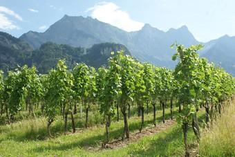 Ontdek Graubünden