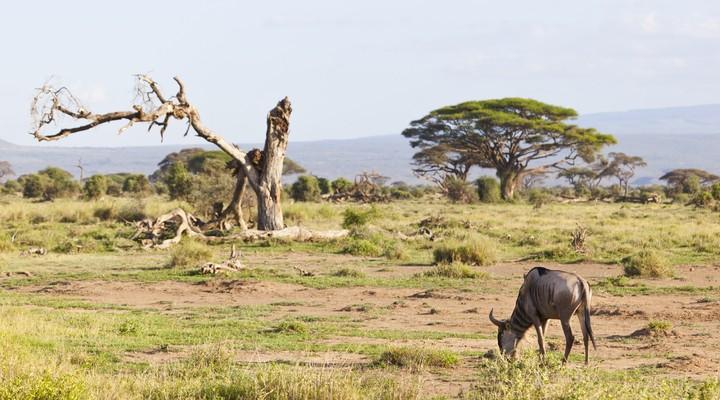 Verhaal over vakantie in Kenia met de titel 'Kenia, een prachtig Afrikaans  land' | Reisgraag.nl