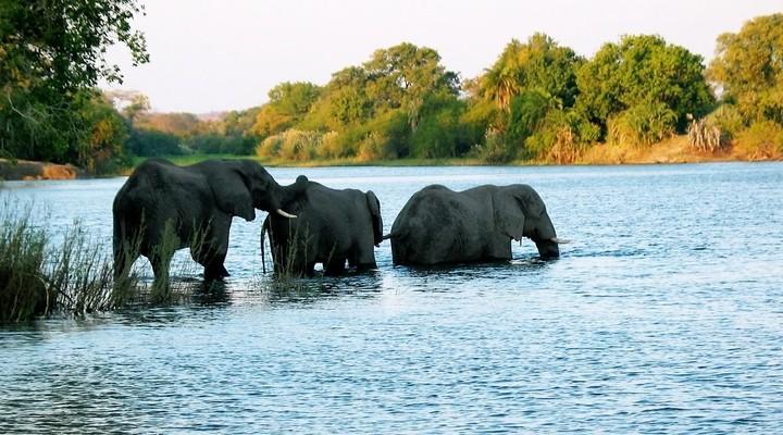 Olifanten tijdens een safari