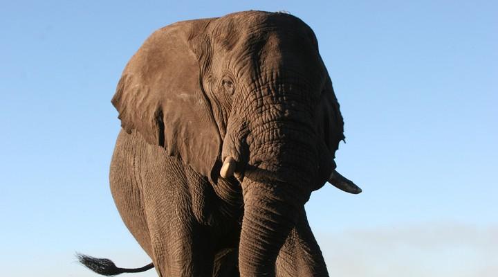 Botswana's Big five
