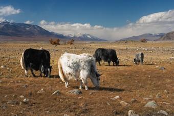 Sawadee organiseert 23-daagse rondreis door China & Tibet