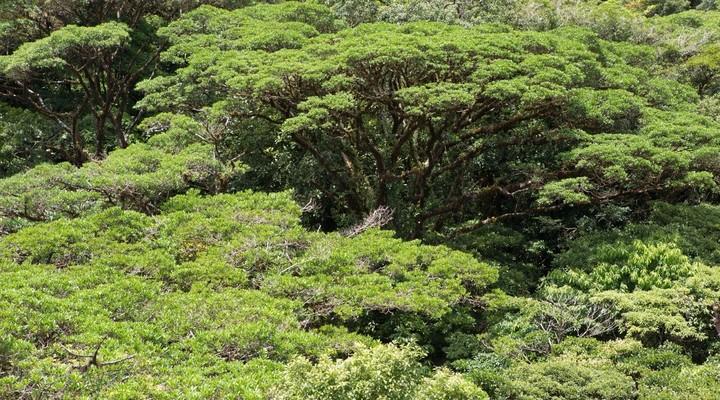 Natuurreservaat Monteverde Cloud Forrest